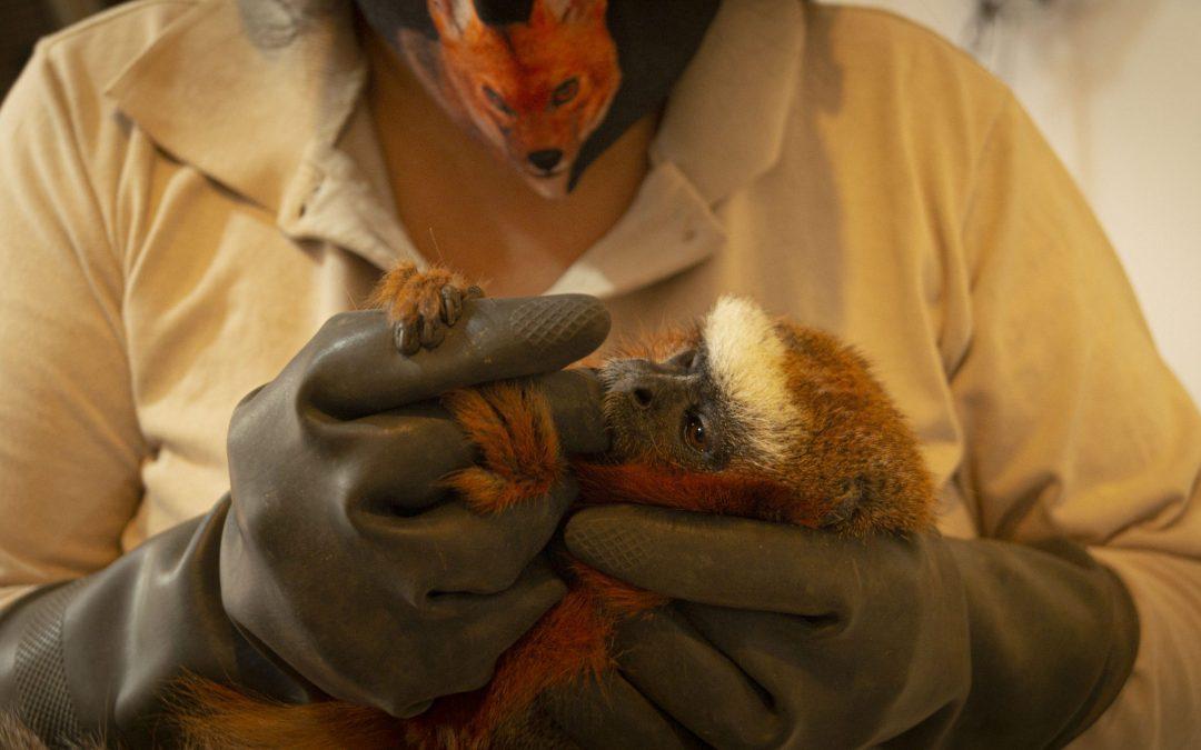 Bienestar Animal del Zoo necesita tu ayuda