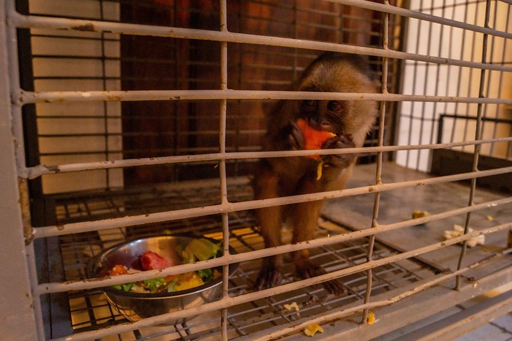mono comiendo en jaula